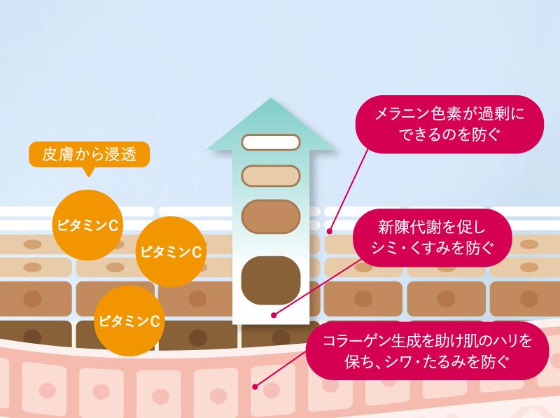 ビタミンが浸透する図